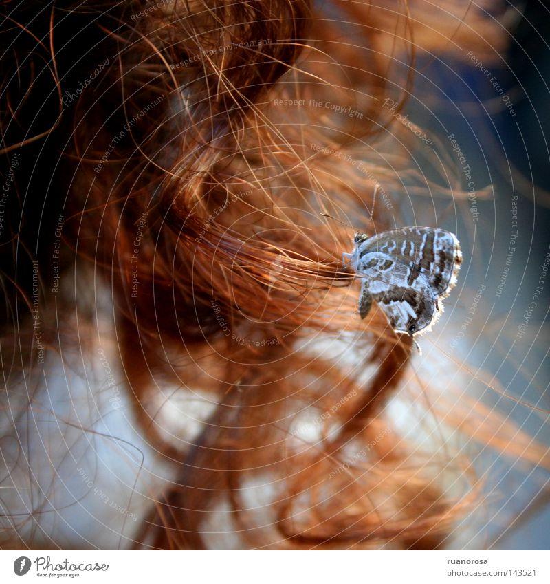 Licénido Insekt Schmetterling Flügel Fühler zerbrechlich Locken Antenne schön Sicherheit Haare & Frisuren blau Farbe Versicherung Behaarung