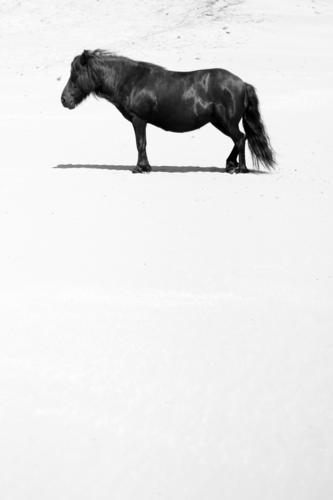 Halb so wild Natur Ferien & Urlaub & Reisen Sommer weiß Sonne Meer Landschaft Tier Ferne Strand schwarz Tierjunges Küste Freiheit glänzend Tourismus