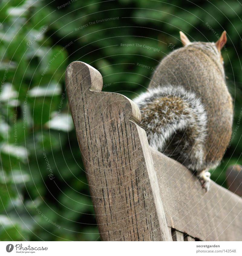 bankgeheimnis. Eichhörnchen Park Tier festhalten grau grün niedlich süß weich Freundlichkeit Sitzgelegenheit Dieb entwenden buschig geheimnisvoll Garten