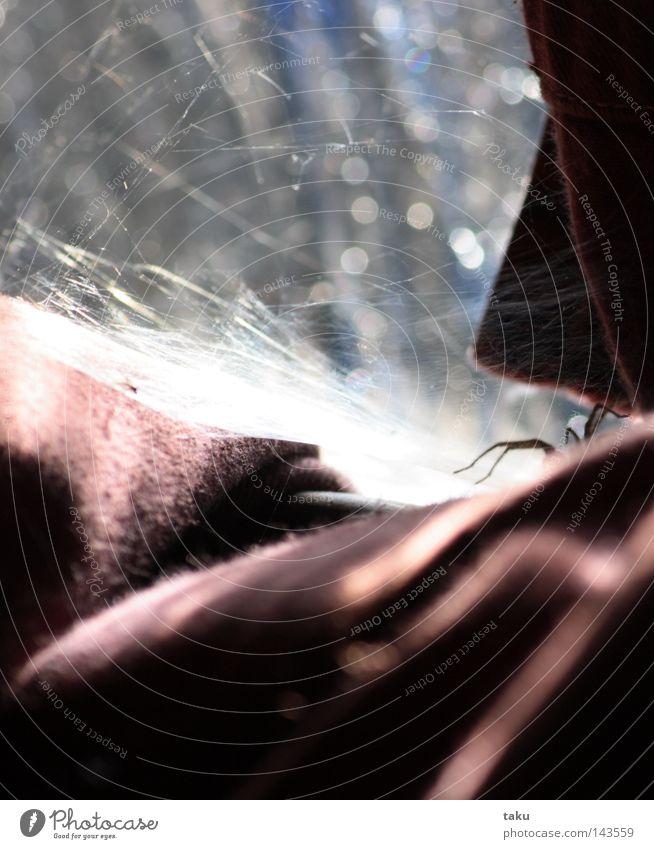LITTLE SPIDER Sonne rot Glas Netz Falte Vorhang Spinne Glasscheibe