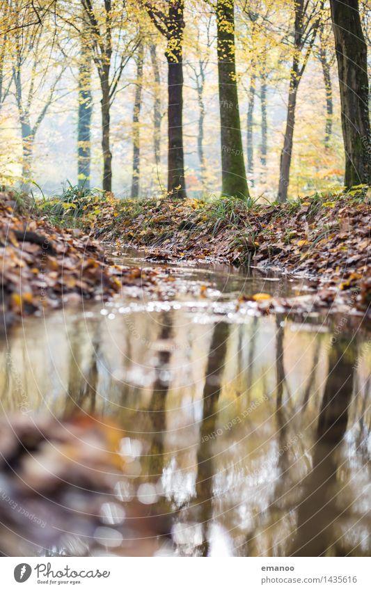 Herbstbach Ferien & Urlaub & Reisen Tourismus wandern Umwelt Natur Landschaft Pflanze Wasser Schönes Wetter Baum Blatt Park Wald Teich See Bach Fluss