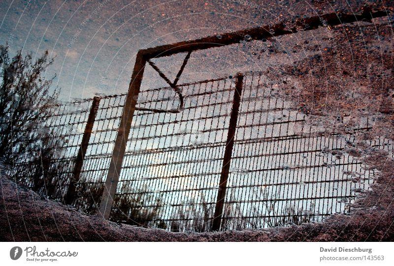 Unterwasserfußball Reflexion & Spiegelung feucht nass Tor Fußball Ball Leder Sportveranstaltung Zaun Hartplatz Baum Pflanze Sträucher Netz Gitter Spieler