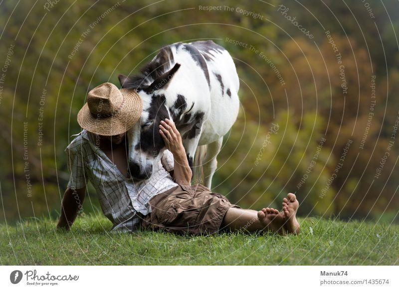 Summer`s End Tier Nutztier Pferd 1 Erholung festhalten genießen Umarmen außergewöhnlich frei positiv Gefühle Stimmung Glück Kraft Leidenschaft Akzeptanz