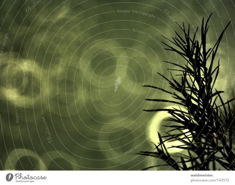 Weidenzweig WRN|08 schön Kreis Sehnsucht harmonisch Geäst Gewässer Zweige u. Äste Spiegellinsenobjektiv (Effekt)