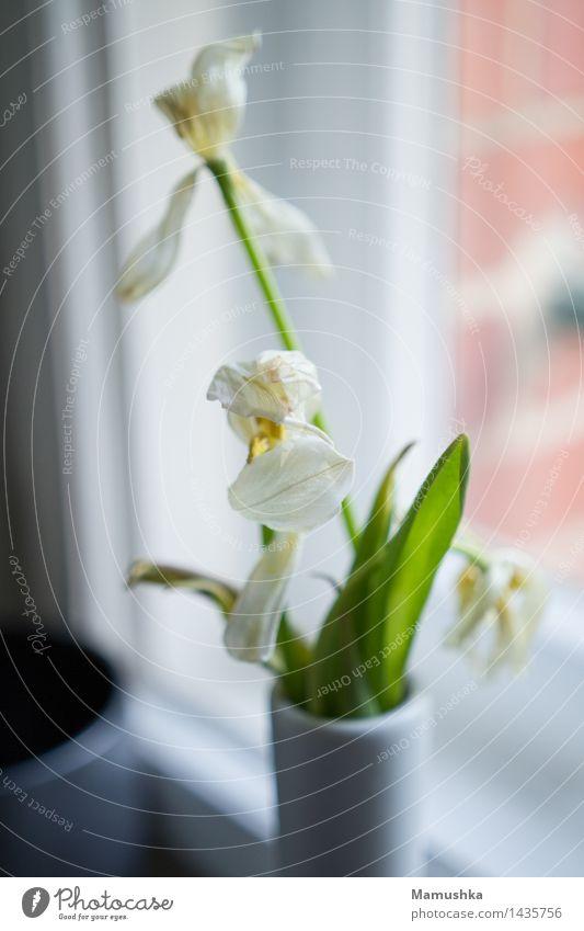Verblüht. Fitness Leben Wohlgefühl Zufriedenheit Häusliches Leben Wohnung Innenarchitektur Dekoration & Verzierung Küche Natur Pflanze Frühling Blume Tulpe
