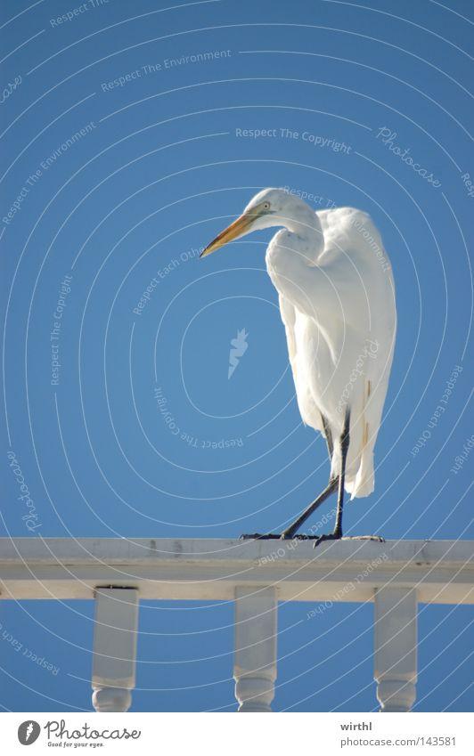 Zwischenlandung Himmel weiß blau Sommer Ferien & Urlaub & Reisen Ferne Farbe Freiheit Vogel USA rein heiß Neugier Appetit & Hunger silber Schönes Wetter