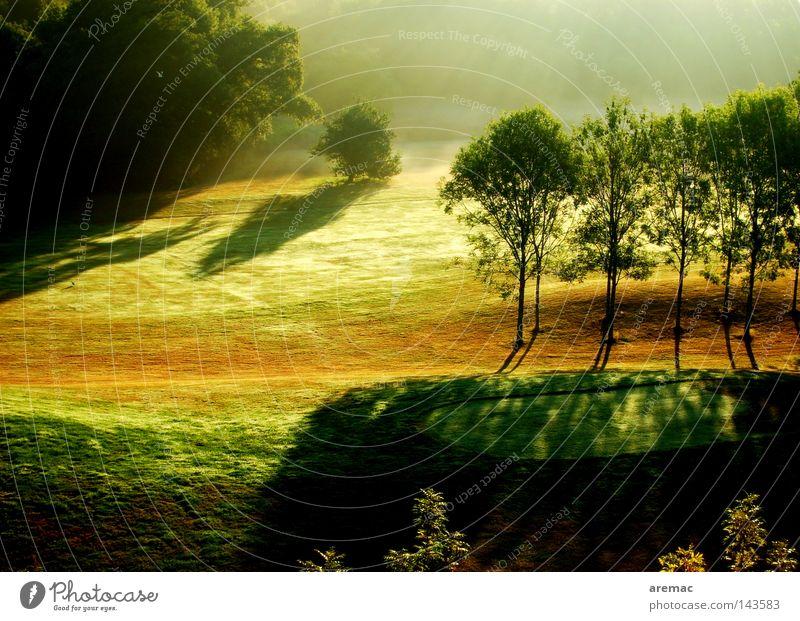 Morgensonne Wald grün Sonnenstrahlen Nebel Licht Sonnenaufgang Golfplatz Ballsport Park Landschaft Natur