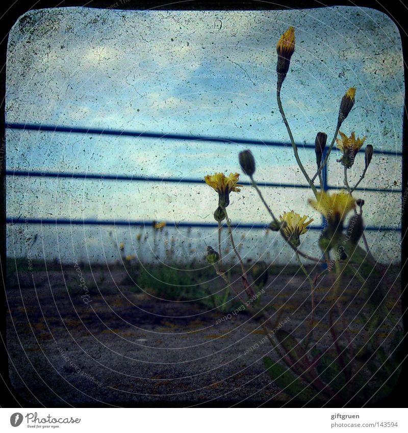 forgotten but not forlorn Blume Einsamkeit Straße Kraft dreckig Kraft trist Bodenbelag Vergänglichkeit Blühend Geländer verloren vergessen verblüht