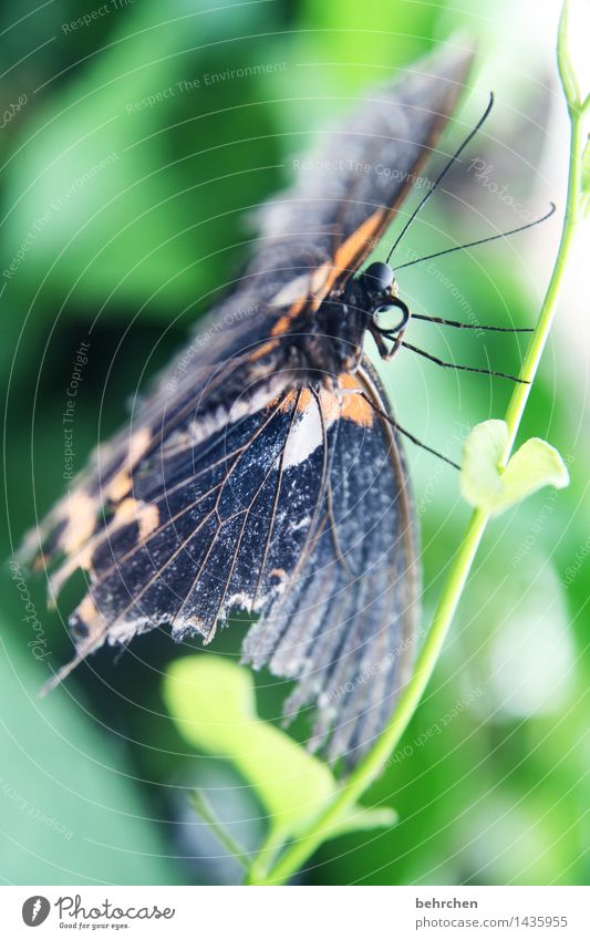 halt finden Natur Pflanze Tier Frühling Sommer Baum Sträucher Blatt Garten Park Wiese Wildtier Schmetterling Tiergesicht Flügel 1 beobachten Erholung fliegen