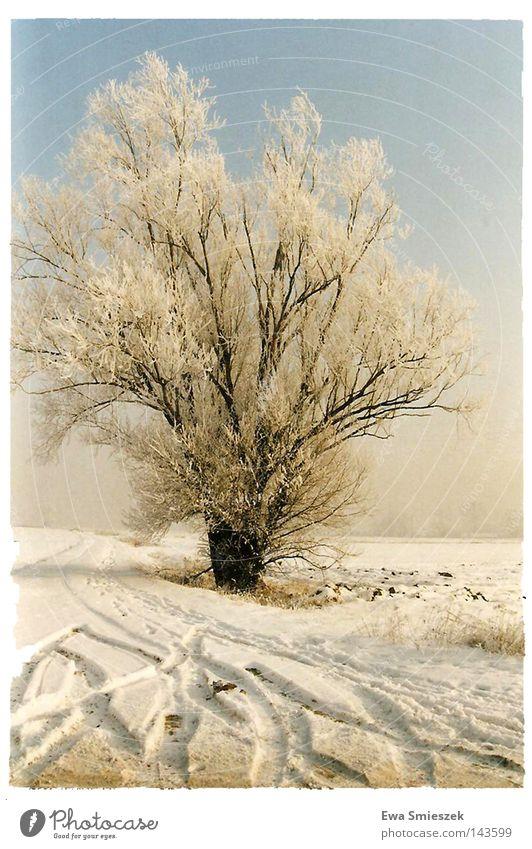 Winter Baum gefroren dunkel Einsamkeit kalt weiß Jahreszeiten Schnee frieren Farbe gut Eis Glätte Gletscher Spuren lassen hart Blatt fallen Zweige u. Äste