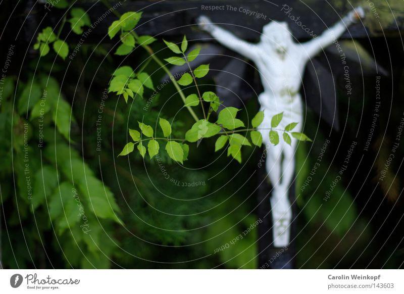 Haaaaleluja (FSK ab 6 J.). Pflanze Sträucher hängen Vertrauen Glaube Religion & Glaube Jesus Christus Kruzifix Katholizismus Zensur Europa Straßenecke bedecken