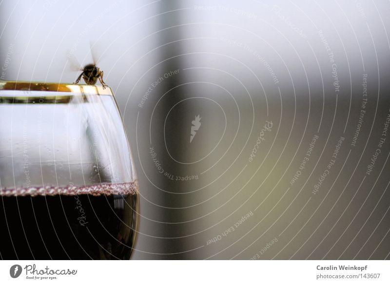 Bzzzzz. Ferien & Urlaub & Reisen schwarz gelb Erholung Tod Wein Flügel Insekt Frankreich kommen untergehen stechen Mörder Wespen Getränk ertrinken