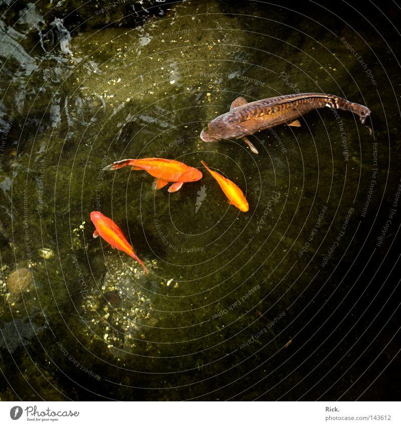 .Ich bin hier der Chef! Wasser weiß Baum grün rot schwarz Wolken Tier Stein See orange Haut gold Fisch Macht Spiegel