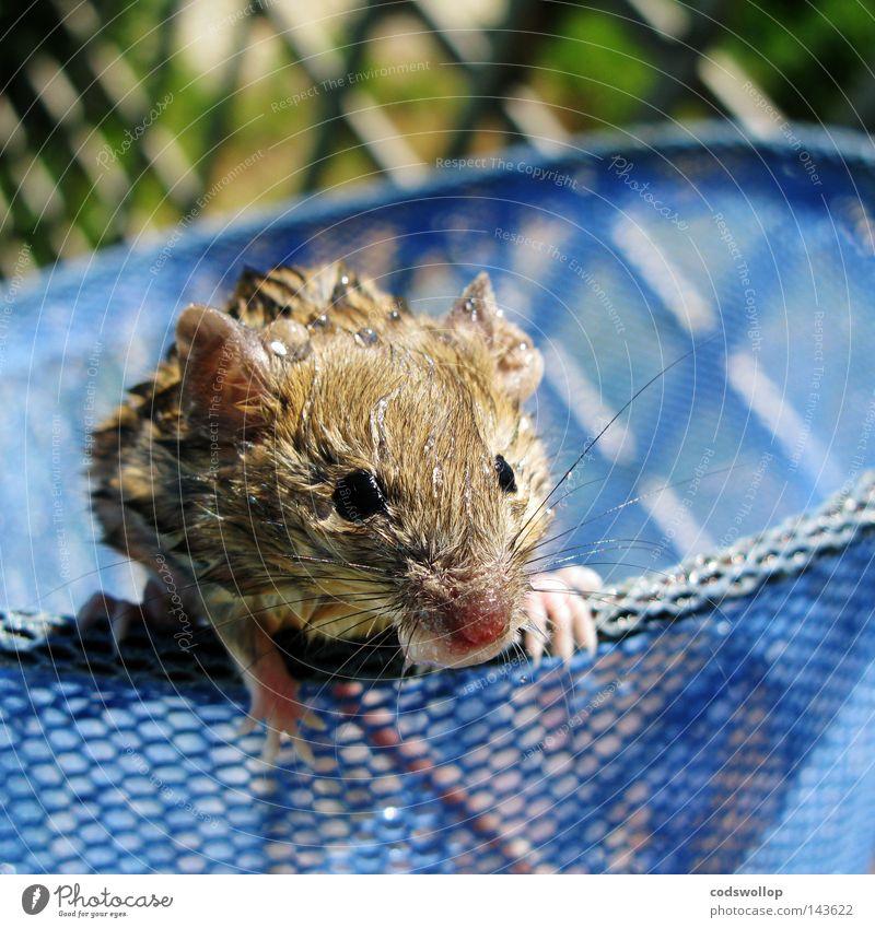 we called him phelps Wasser nass Sicherheit Schwimmbad Netz fangen Maus Säugetier Rettung retten Tier Strandposten Backenbart einweichen