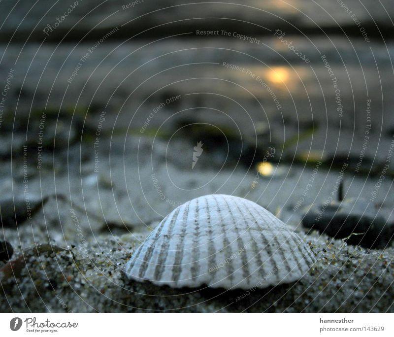 strandgut Muschel Herzmuschel Strand schlechtes Wetter nass Limfjord Skandinavien unterwegs Luft kalt Sommer Küste Sand Wasser Sonne dämerung Wolken Fjord