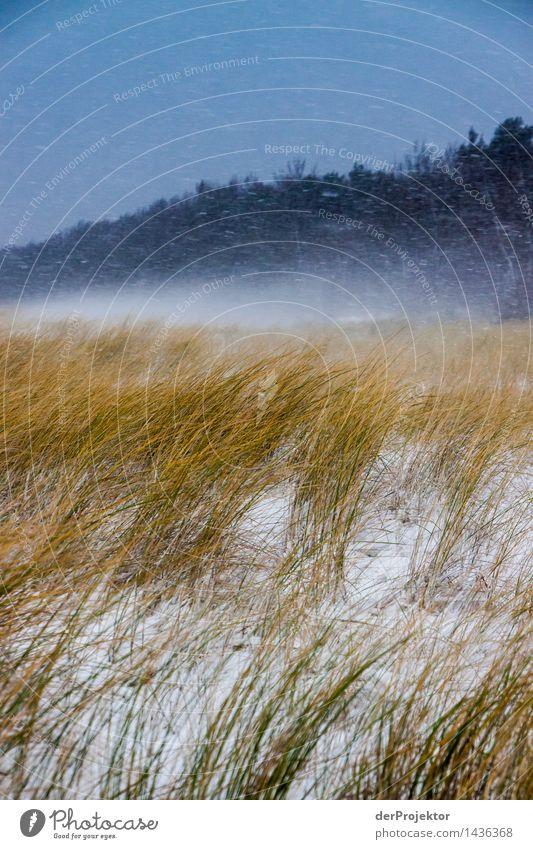 Schneedünen auf Rügen Natur Ferien & Urlaub & Reisen Pflanze Landschaft Tier Ferne Winter Umwelt gelb Gefühle Küste Schneefall Tourismus Eis wandern