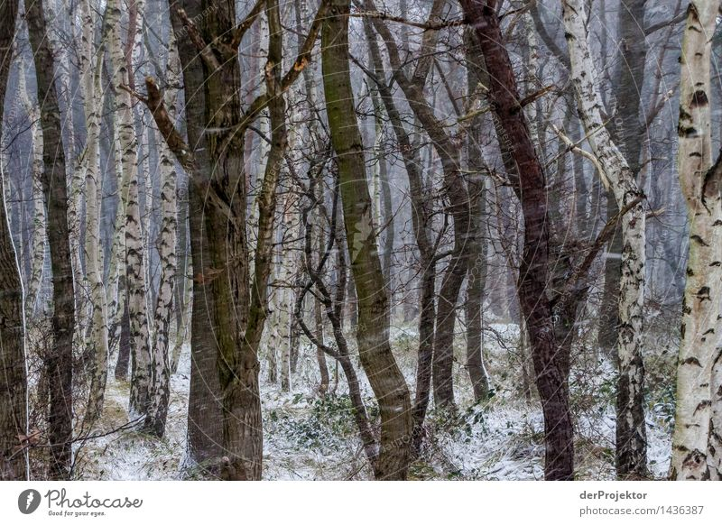 Wandtapete im schlechten Wetter Ferien & Urlaub & Reisen Tourismus Ausflug Abenteuer Ferne Winterurlaub wandern Umwelt Natur Landschaft Pflanze