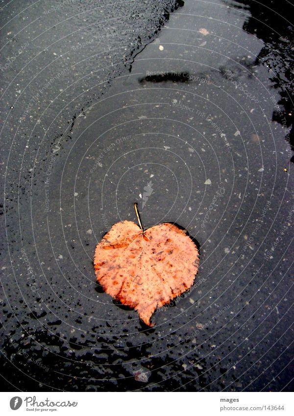 Herzblatt Wasser Blatt Einsamkeit Straße Herbst Regen nass Vergänglichkeit rotbraun