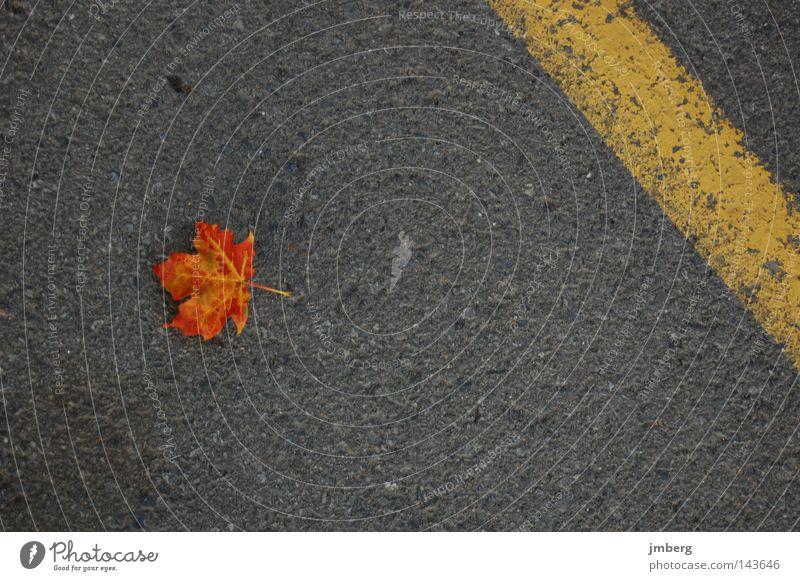 Blatt Herbst braun Asphalt Straßenbelag einzeln Herbstlaub Ahorn gefallen welk Herbstfärbung Ahornblatt