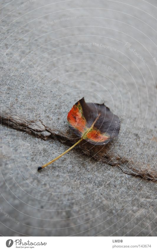 Buntes Apfelblatt Baum grün Pflanze ruhig Blatt gelb Leben Erholung Herbst Tod grau Stein Traurigkeit braun orange Trauer