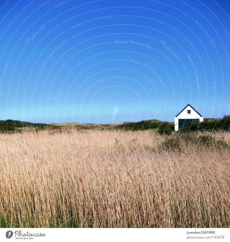 In den Dünen Himmel Natur schön Baum Ferien & Urlaub & Reisen Strand Haus ruhig Erholung Gras Sand Küste braun Wind wandern frei