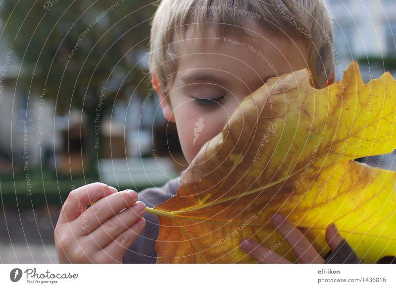 Ich kann den Herbst riechen Mensch Kind Junge Kindheit 1 3-8 Jahre Blatt genießen friedlich achtsam ruhig Zufriedenheit Duft erleben Gefühle Gelassenheit