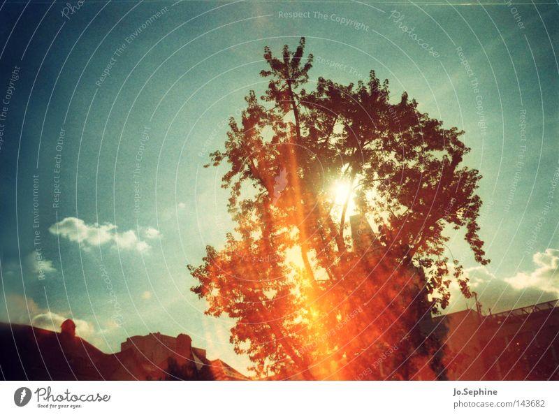 sunburn Sommer Umwelt Himmel Klimawandel Wärme Baum Surrealismus Ozonloch Klimaschutz blenden Blauer Himmel Wolken Sonne Dämmerung Sommerabend Baumkrone