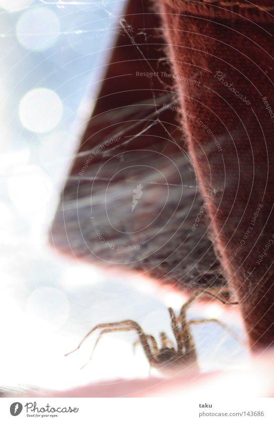 LITTLE SPIDER I rot Fenster Glas Netz Falte Vorhang Spinne Nähgarn Glasscheibe