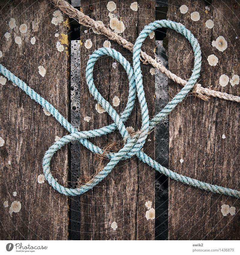 Stolperfalle Anlegestelle Steg Seil Fischereiwirtschaft Fischereihafen Holz liegen warten maritim trashig unten achtsam Wachsamkeit Vorsicht Kontrolle fest