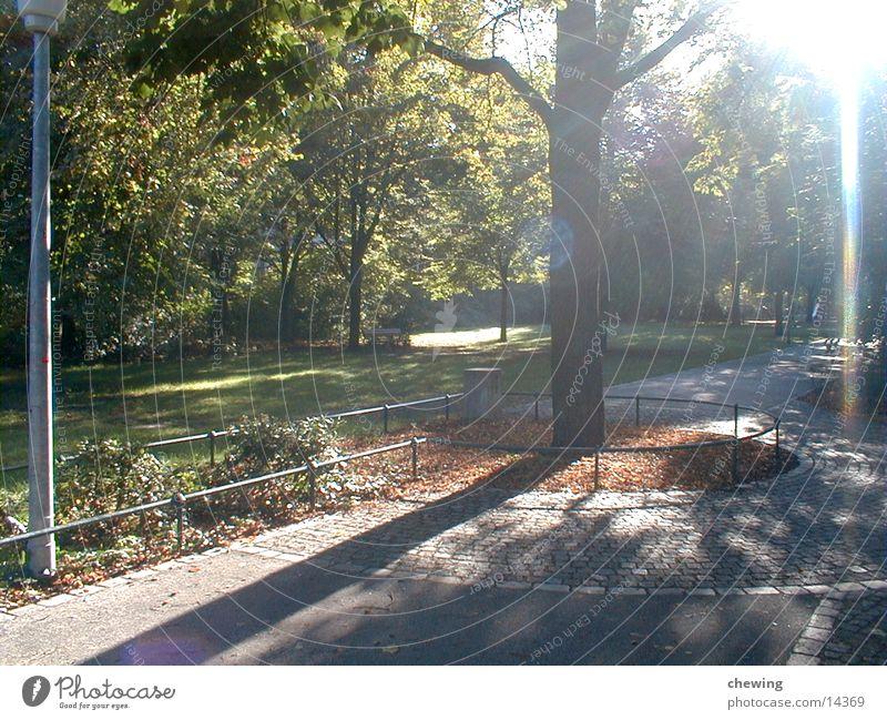 park Natur Baum Sonne grün Sommer Park