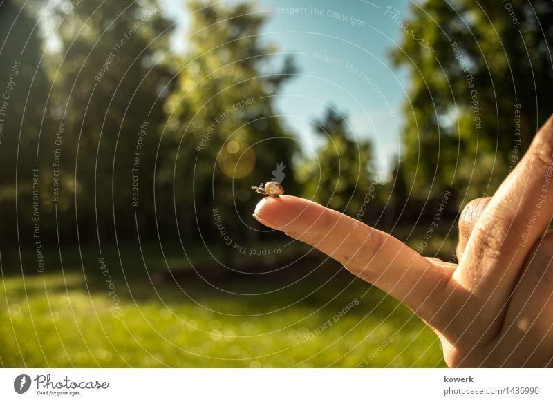 Ausblick Natur Schnecke beobachten Zufriedenheit Tierliebe Hand Farbfoto Außenaufnahme Textfreiraum links Tag Licht Sonnenlicht Tierporträt