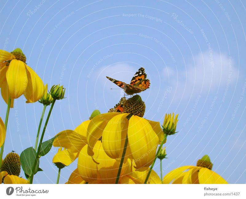 Natur im Design der 70er :) Himmel Blume blau gelb Schmetterling