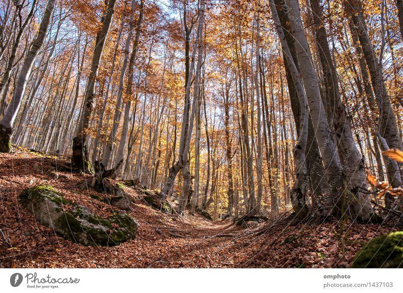 Landschaft mit einem Herbst in einem Buchenwald. Die Blätter fallen von Zeit zu Zeit schön Natur Pflanze Sonne Sonnenlicht Wetter Baum Blatt Park Wald