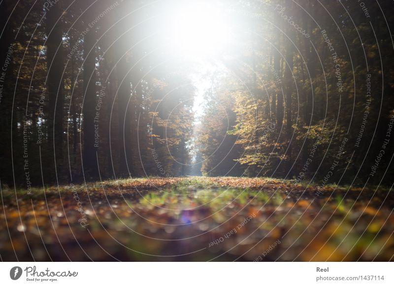 Licht Natur Landschaft Sonne Sonnenlicht Herbst Schönes Wetter Pflanze Baum Blatt Laubwald Wald Fußweg hell Geborgenheit Gegenlicht lichtvoll schön ruhig