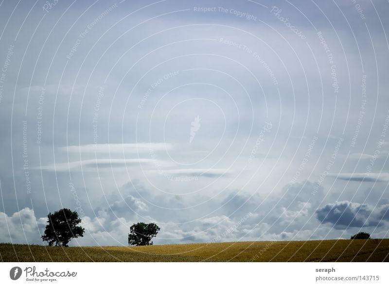 Frei Hintergrundbild Wiese Feld Wolken Pflanze Freiraum Erholung Frieden Aussicht Horizont zyan minimalistisch Leichtigkeit leicht ländlich ökologisch