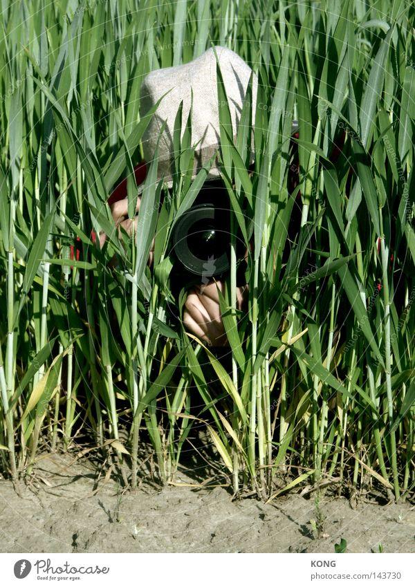 peeping frood Pflanze grün Feld beobachten Fotografie geheimnisvoll entdecken Medien Fotokamera Halm verstecken Publikum Videokamera Durchblick Linse