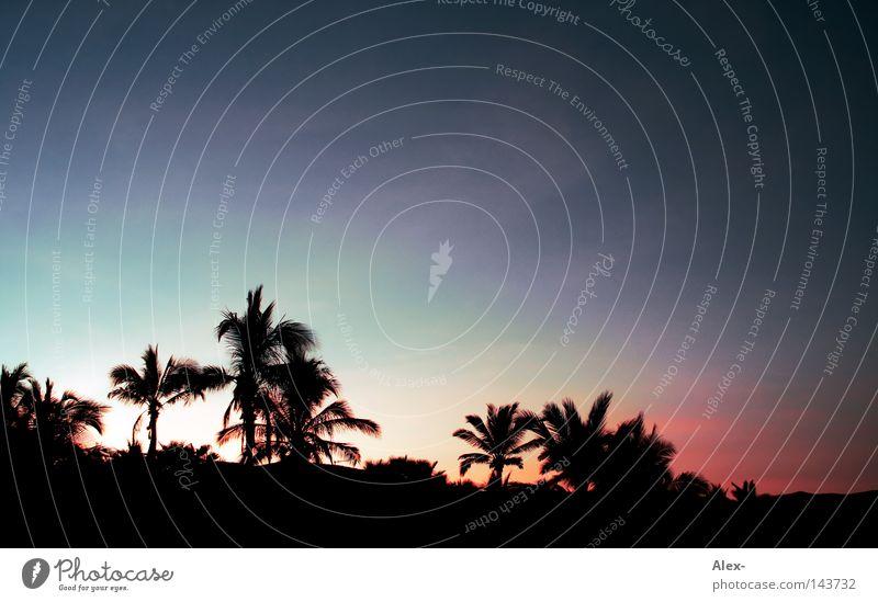 Mit Morgenpalme blau am Strand Himmel Baum Meer rot Sommer Ferien & Urlaub & Reisen dunkel kalt Wärme Beleuchtung Physik heiß Palme Paradies
