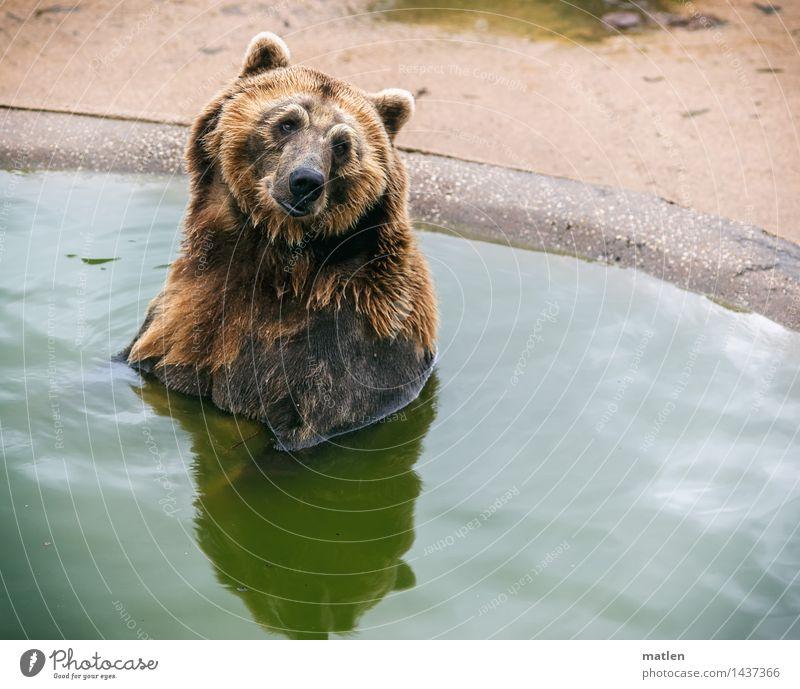 Frolln Helen grün Tier Schwimmen & Baden braun Zufriedenheit sitzen Fell Bär