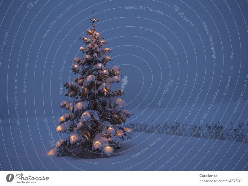 Weihnachtsbaum im Schnee Winter Winterurlaub Weihnachten & Advent Eis Frost Tannenbaum Christbaum Kerze Lichterkette Feste & Feiern blau gelb grau weiß Gefühle