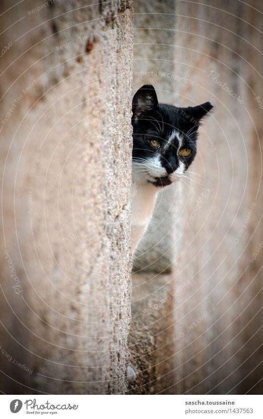 Blickkontakt Katze Stadt weiß Tier schwarz Wand Mauer Stein braun Fassade Zufriedenheit elegant Wildtier ästhetisch Lächeln beobachten