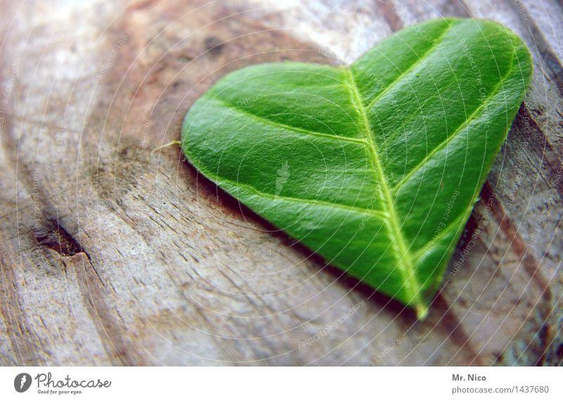grünes herz Pflanze Blatt Warmherzigkeit Sympathie Zusammensein Liebe Verliebtheit Romantik dankbar Herz Holz Kräuter & Gewürze herzförmig Glück Grüner Daumen