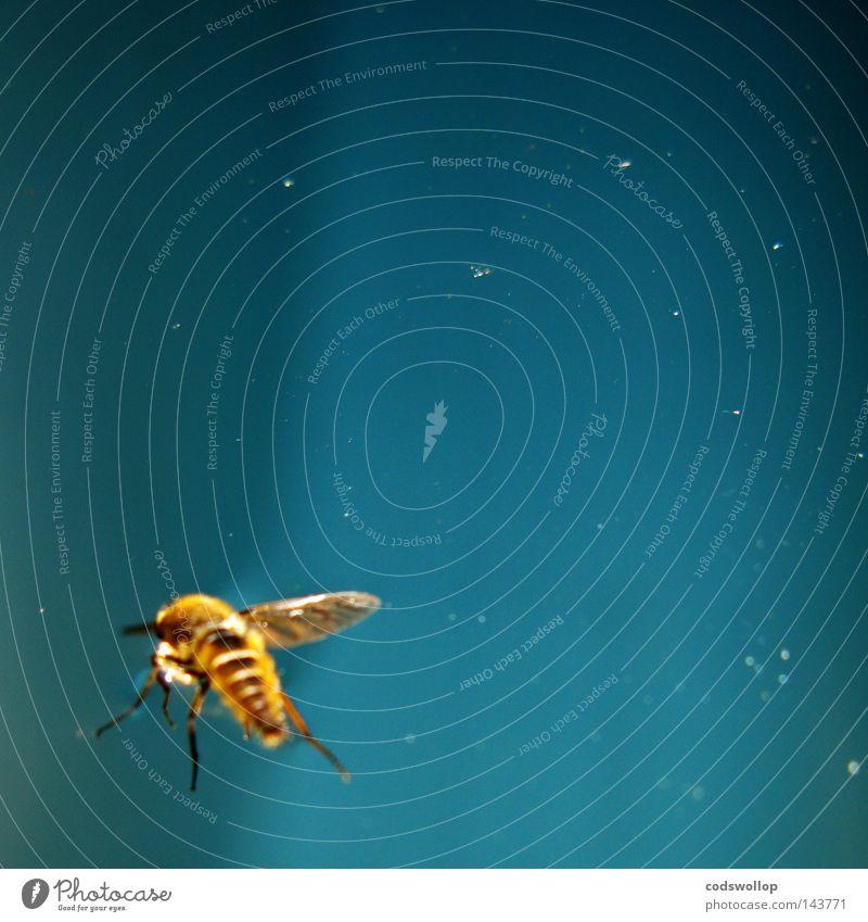 abeille Himmel blau Biene