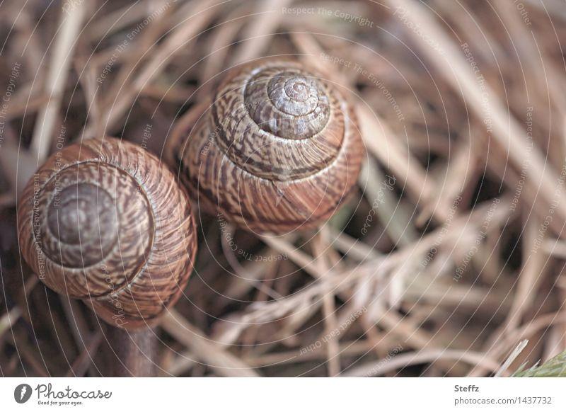 wir zwei Umwelt Natur Stroh Schnecke Schneckenhaus 2 Tier Tierpaar Zusammensein nah natürlich rund schön braun Freundschaft Zusammenhalt hellbraun Spirale