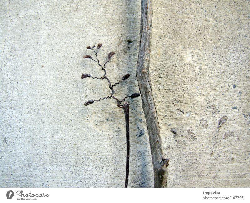 Zauberstab Herbst trocken pflanze Hintergrundbild hintergrund Natur zart vertrocknet Dekoration deko zweig ast braun grau Altbier Flora getrocknetes Netz bluete