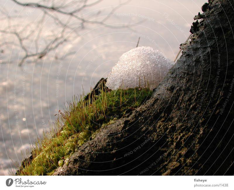 Tauwetter Winter Schnee Frühling Moos