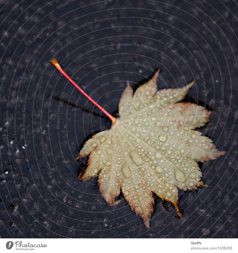 Herbstblatt im Regen Ahornblatt Regentropfen Tropfen herbstliche Impression Herbstregen gefallenes Blatt Herbstlaub Blattadern Oktober November Herbstgefühle