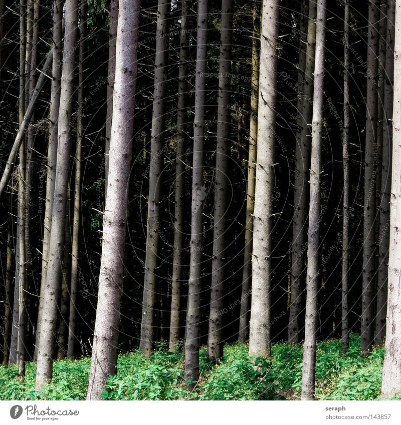 Mikado Wald Baumstamm Tanne Waldsterben Holz Unterholz vertikal Baumrinde Pflanze Abholzung abstrakt Hintergrundbild Umwelt Herbst Botanik Nadelbaum Nadelwald
