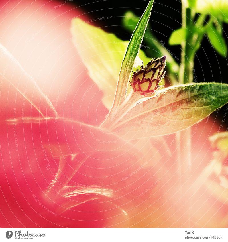 gegensätzlich Natur schön Sonne Blume grün Pflanze Sommer ruhig Ferne gelb Farbe Lampe Erholung Wiese Gefühle Blüte