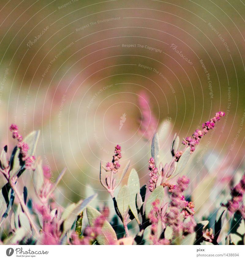 was ist denn das Natur Ferien & Urlaub & Reisen Pflanze Sonne Landschaft ruhig Wiese Gesundheit Glück Garten rosa Sträucher Blühend Schönes Wetter