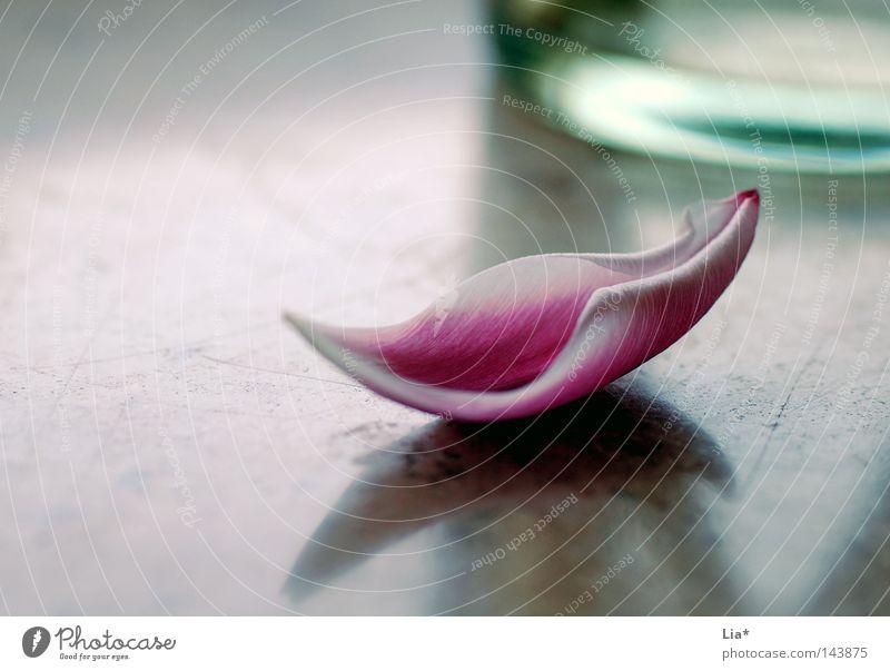 gefallen II schön Blume Einsamkeit Blüte Traurigkeit Vergänglichkeit Romantik Trauer weich einfach rein Kitsch Blühend zart Tulpe